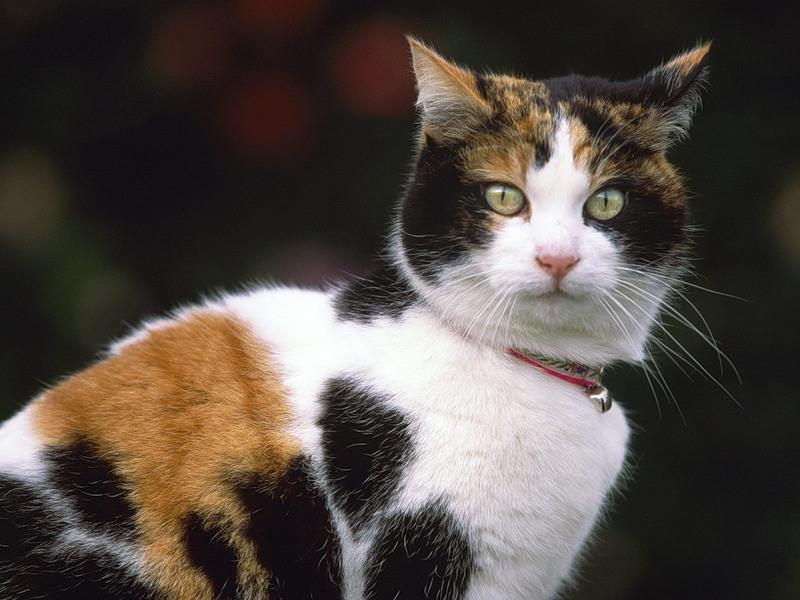 Как приручить кошку к унитазу
