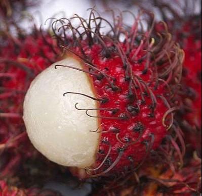 Экзотические фрукты мира