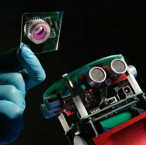 Британские ученые создали биоробота