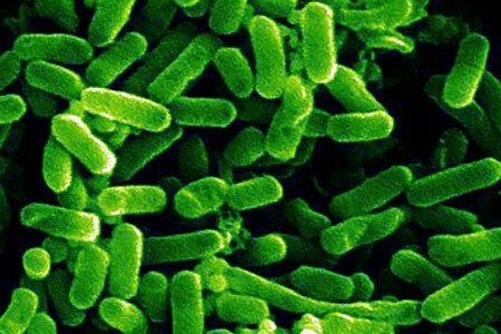 Кишечная палочка E.coli