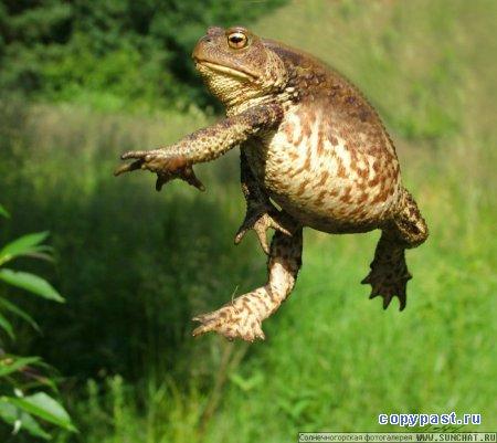 Фотографии жаб