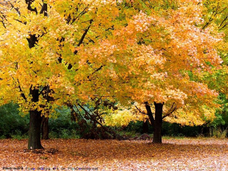 осень - не время болеть