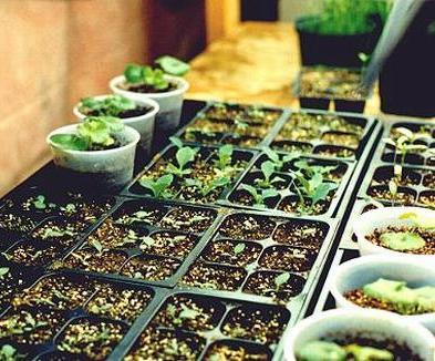 Как подкармливать садовые растения: Как подкармливать сельскохозяйственные культуры