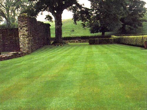 Газон. Обустройство идеального газона.