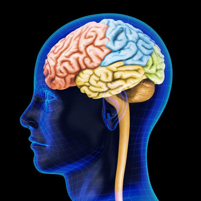 Метформин способствует образованию новых нейронов в головном мозге